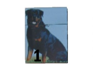 3117-D10 Plastic Cigarette Case, Cats and Dogs